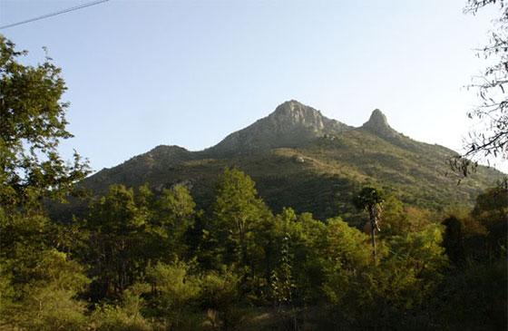 Arunachala, Gurus, Satsang, Tiruvannamalai,